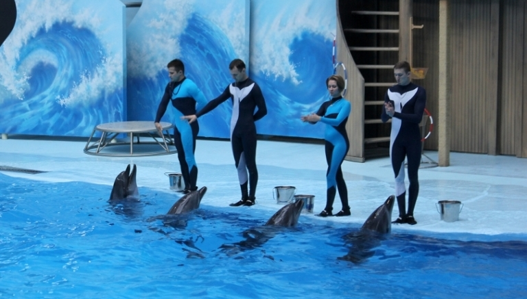 Дельфин 2018 музыка в MP3 - скачать бесплатно, слушать музыку дельфин